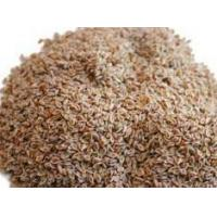 Quality Psyllium Seeds wholesale