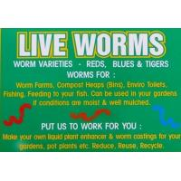 Buy cheap Compost Worms 1 Kilogram from wholesalers