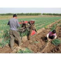 Quality Hand push Chinese onion and Rhizome harvester machine wholesale