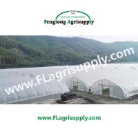 Quality Single Span Agricultural greenhouse for vegetable fruits wholesale