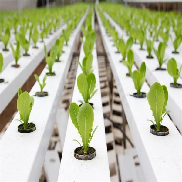 Cheap Agricultural Greenhouse Flat Hydroponics commercial hydroponics for sale