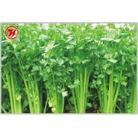 Quality Parsley wholesale