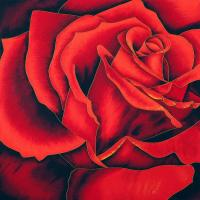 Quality Red rose and blue rose wholesale