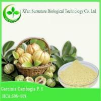 Quality Weight Loss Garcinia Combogia Extract wholesale