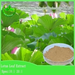Cheap Weight Loss Lotus Leaf Extract for sale