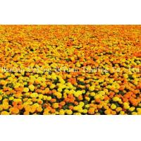 Buy cheap Marigold Natural Lutein 5% - Marigold Flower Extract from wholesalers