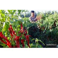 Buy cheap Paprika Chili Crushed Visual Seeds from wholesalers