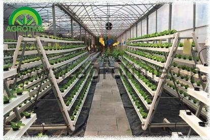 Cheap Hydroponics Systems for sale
