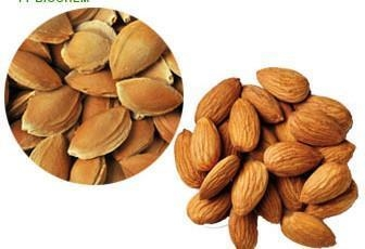 Cheap Organic Sweet Apricot Kernels for sale