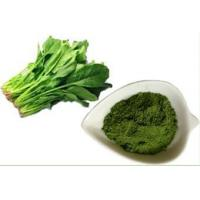 Cheap Organic Fruit & Vegetable Powder Spinach powder for sale