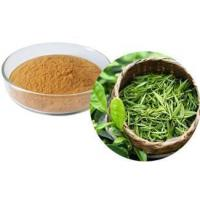 Quality Green tea (whole, cut, powder, extract powder) wholesale