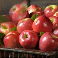 Quality PINK LADY APPLES NO.30 deliver gift hamper to shenzhen wholesale