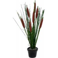 Buy cheap Cattail Arrangement in Pot from wholesalers