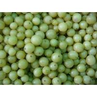 Buy cheap Frozen Gooseberry from wholesalers