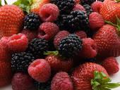 Buy cheap Frozen Mixed Berries from wholesalers