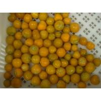 Buy cheap Frozen Cape Gooseberry (Physalis) from wholesalers
