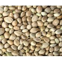 Quality hemp seed extract wholesale