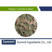 Buy cheap Tribulus terrestris extract,40% Saponins,fruit from wholesalers