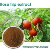 Quality Factory Rosehip Seed Oil,Rose Hips Seed Oil , Rose Hips Oil wholesale