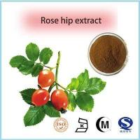 Quality fructus rosae extract natural rose hip oil rose hip seed oil wholesale