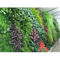 Quality Aritifical Grass Wall wholesale