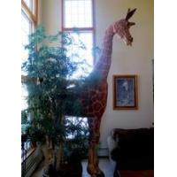 Quality 12' Giraffe Sculpture used for sale wholesale