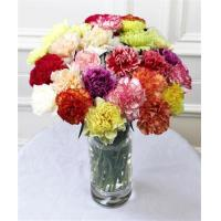 Get Well Flowers Mixed Carnations Mixed Guernsey Carnations 25.00 20.00 Mixed Carnations