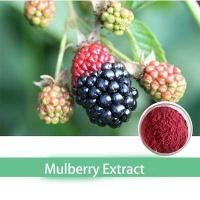 Quality top qualiy 10:1 bulk organic mulberry extract powder wholesale