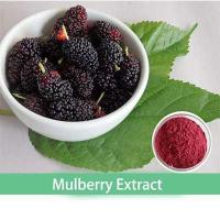 Buy cheap 1kg Mulberry Extract 15:1 (Latin name: Morus alba L) from wholesalers