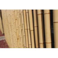 Quality Raw and Solid Whangee Bamboo Pole, Eco-friendly Pole wholesale