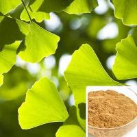 Quality Extract of Ginkgo biloba wholesale