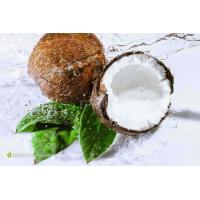Quality English  Coconut Concentrated Powder wholesale