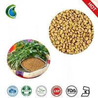 Quality Medicinal Testofen Fenugreek Trigonella Foenum-Graecum Seeds Extract Powder wholesale
