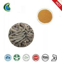 Quality Common Curculigo Rhizome Extract(curculigo Common Rhizome Extract Cultivated) wholesale