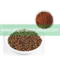 China 95% OPC Grape Seed Extract / Grape Seed Powder Proanthocyanidins on sale