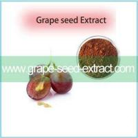 China Natural Grape Seed Extract Powder,Grape Seed Extract Organic Grape Seed Extract on sale