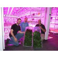 Quality Hydroponic Indoor Farm Hydroponic Home and Hobby System wholesale