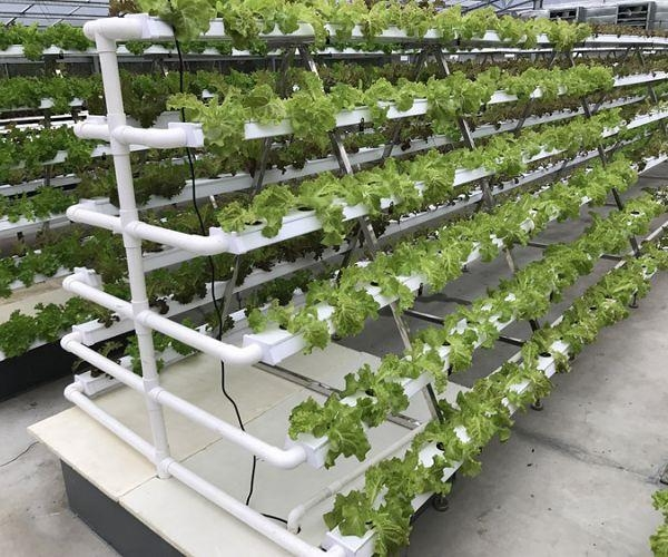 Cheap Hydroponic Kits for sale