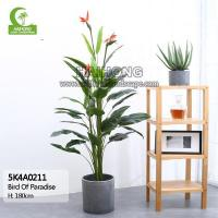 Quality Haihong Insights Bird Of Paradise wholesale