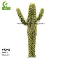 Quality Haihong Insights Cactus wholesale