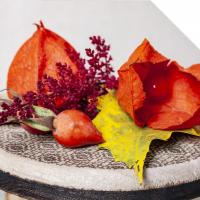 Cheap Physalis for sale