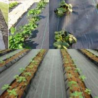 Quality PP/PE woven weed control mats wholesale