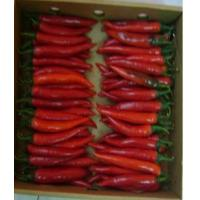 China Pepper (Egypting Hot Chili) on sale