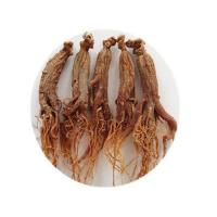 Quality Organic Red Ginseng Entire Roots wholesale