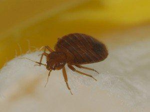 China time not fixed bed bug exterminator phoenix service availability to many outlying areas