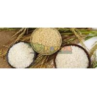 Buy cheap Thailand Rice from wholesalers